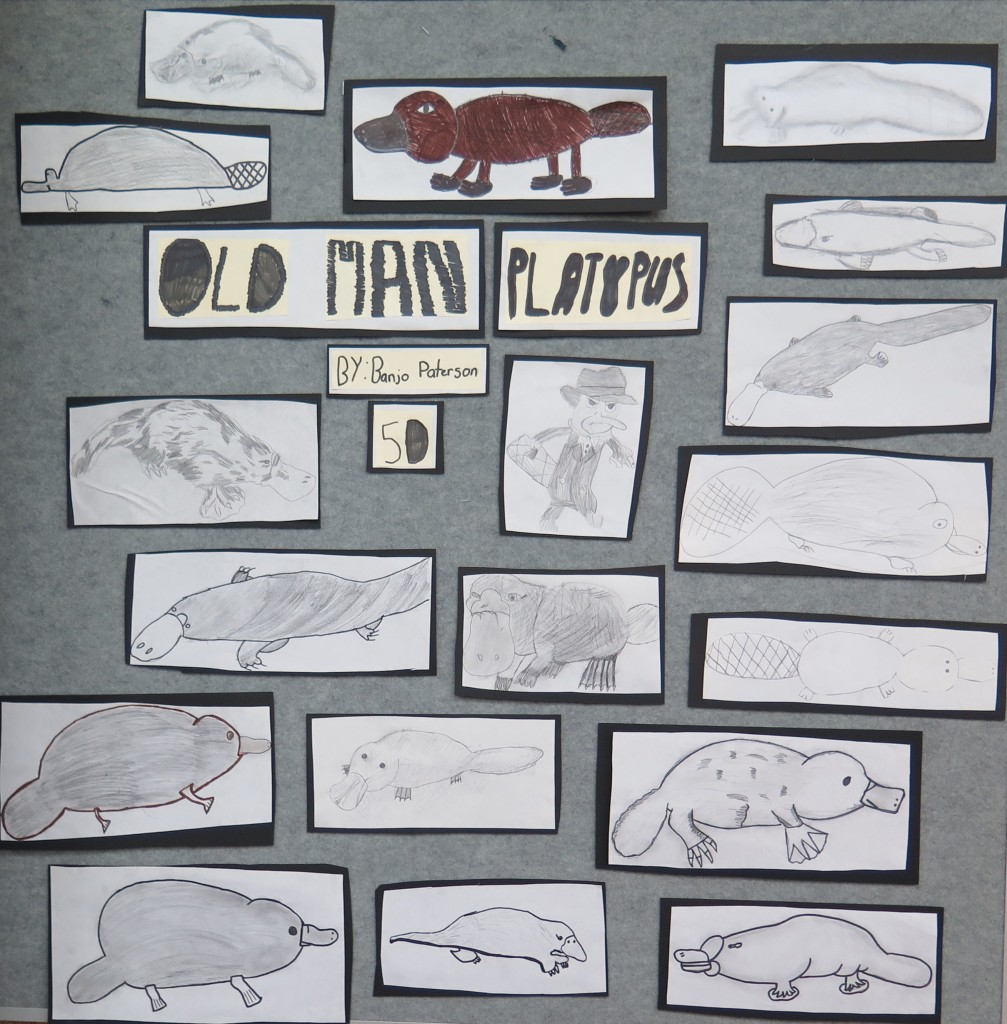 Old Man Platypus Display